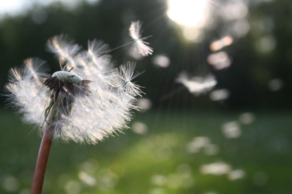 Allergieën: alles wat u moet weten!