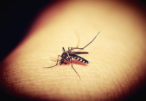 """""""Ik ben een magneet voor muggen!"""""""